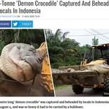 体重500kg超「悪魔のワニ」をついに捕獲も重すぎてブルドーザーで移動(インドネシア)<動画あり>