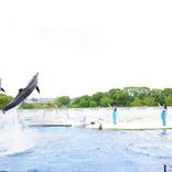 この夏パワーアップした『京都水族館』!イルカとトレーナーの友情&クラゲ新展示エリアに感動【満足レポ】