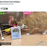 """棚から器用にペヤングを引きずり出す""""ペヤング泥棒""""な猫がかわいすぎる! 盗んだあとはリビングに放置(笑)"""
