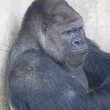 どの生き物に会いたい?「旅好きが選ぶ!日本人に人気の動物園・水族館ランキング2020」