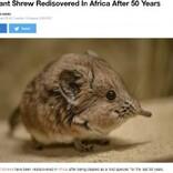 50年ぶりにアフリカで発見! 象の仲間ソマリ・ハネジネズミの姿に専門家も大興奮