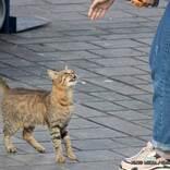 鳴きながら『何か』を訴える猫 付いて行ってみると…?
