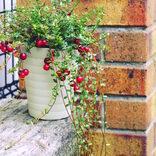 マンションのベランダガーデニング特集!育てやすいおすすめの花や植物は?
