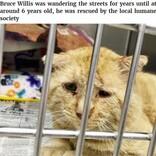 """""""世界一悲しそうな猫""""引き取られて1年で""""幸せいっぱいの猫""""に(米)<動画あり>"""