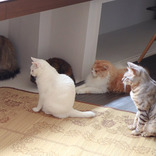 同じ方向を向く猫たち… 異様な光景に、8万人が癒された理由とは?