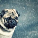 【重要】「すべての犬をしまえ」絶対に忘れてはいけない台風対策が話題 - 「猫もしまえ」「収納しました」と共感の声集まる