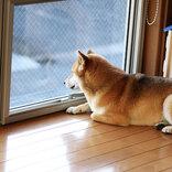「すべての犬を家の中に」 台風上陸前、犬の飼い主が呼びかけた理由