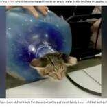 大容量の水のボトルにはまった子猫 消防隊員に救出される(インドネシア)<動画あり>