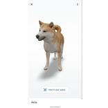 Google検索の「ARアニマル召喚」に、秋田犬が参戦
