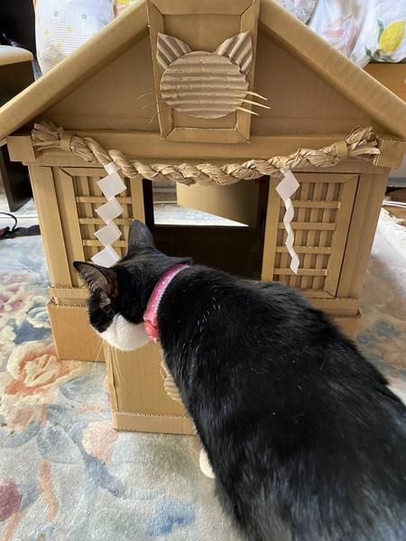 ダンボール神社に収まった猫神様