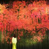 チームラボボーダレス、紅葉や彼岸花などの秋限定作品が9月より登場