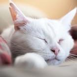 愛猫が旅立って飼い主が『知ったこと』に涙  10年間を振り返ると…