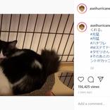 """「懐かしい」ミキ亜生の愛猫2匹が""""あのデュオ""""にしか見えないと話題"""