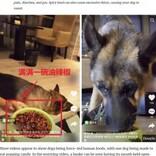 犬に無理やり唐辛子や弾けるキャンディーを与える「食べる放送」が物議(中国)