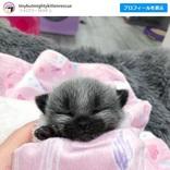 ネコっぽくない顔の子猫 「アライグマとかキツネの赤ちゃんに見えるよ」「『あつ森』のキャラが現実になった姿がこの子」