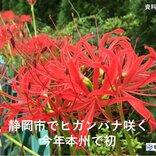 21日 静岡でヒガンバナが開花 あすは彼岸の中日