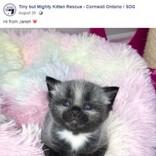 生後1日、体重82グラムで保護された銀色の子猫に新しい家族(カナダ)<動画あり>