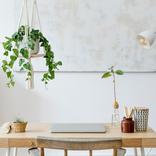 植木おじさんに聞く【9】空間を美しく演出、場所を取らずに飾れるハンギンググリーン