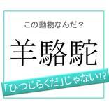 【動物漢字】「ひつじらくだ」ではありません!「羊駱駝」は何と読む?