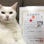 愛する19歳シニア猫との尊い時間。「長寿表彰」をもらった白猫もも