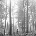 【米ビルボード・アルバム・チャート】テイラー・スウィフト『フォークロア』首位返り咲き、4作品がTOP10デビュー