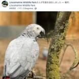 来園客を「失せろ!」と罵倒する動物公園の大型インコ、裏に隔離される(英)