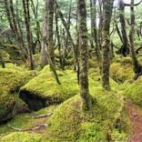 絶景と秘湯に出会う山旅(15)白駒の池と苔むす森、そして蓼科親湯温泉<長野県>
