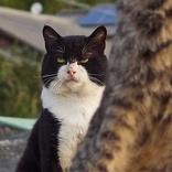 """弟子の稽古を見守るような貫禄の佇まい… """"親方猫""""の存在感が「桁違い」、後方なのに目立ってしまう"""