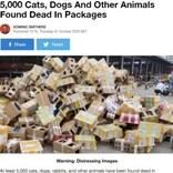 5000匹を超える犬や猫などが梱包されたまま放置される 命があったのはわずか250匹(中国)