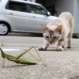 「衝撃のオチ」「思ったのと違う」 バッタを見つけた猫の行動に15万人が釘付け!