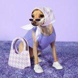 フォロワー25万人のオシャレ犬、人間向けファッションブランドを設立