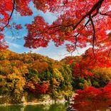 【関東紅葉スポット2020】秋色に染まる絶景を見に出かけよう!