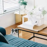 猫の暮らしやすさとインテリアの統一感を両立。猫好き夫婦が暮らす建築家設計物件(世田谷区)|みんなの部屋