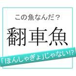 【魚漢字】「ほんしゃぎょ」ではありません!「翻車魚」は何と読む?