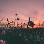 BUMP OF CHICKEN「Gravity」優しさに溢れた歌詞が作り出すのはあなたの帰る場所