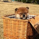生まれて初めて外の世界を見た子犬 その反応に26万人が悶絶