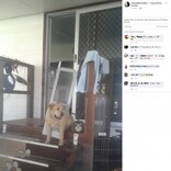 太りすぎの犬がドッグドアを破壊 挟まった姿に「ダイエット決定」と飼い主(豪)
