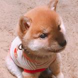 子犬に『おすわり』を教えた結果? 3枚の写真に、20万人が悶絶!