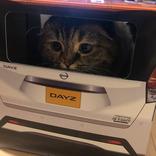 『紙製の車』に入る猫がかわいすぎると話題に! 「試乗させたい」の声続出
