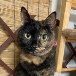 瀕死のサビ猫・ひまわりとの出会い「あと5分遅ければ道でそのまま…」