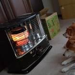 寒くなったのでストーブをつけたら? 柴犬の『とろける過程』を写した4枚