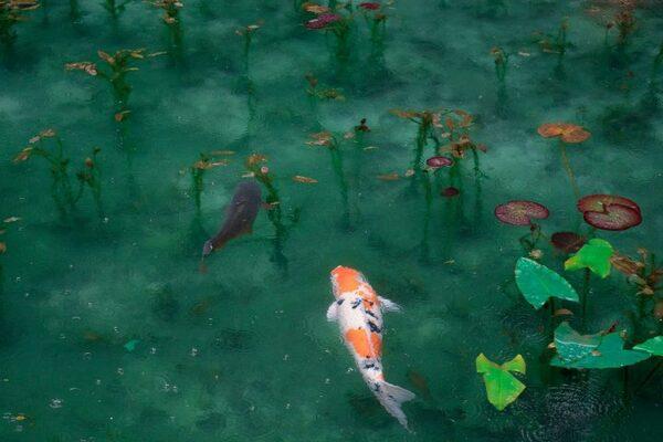 一度は行きたい日本の「モネの池」