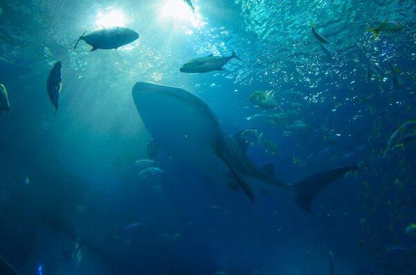 一度は行きたい日本の「美ら海水族館」