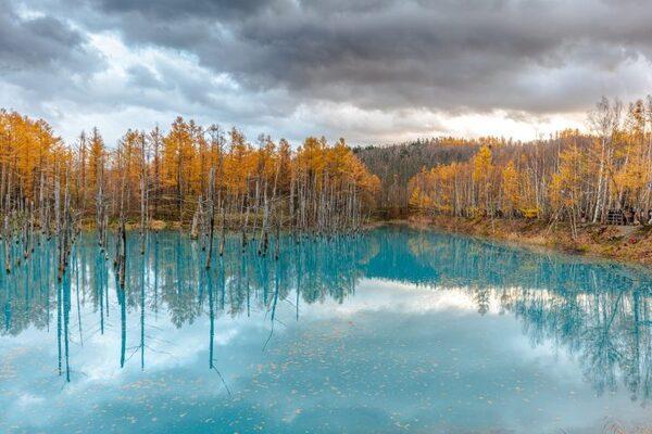 一度は行きたい日本の「白金青い池」