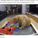 「困ったワン」鳴き止まぬ子犬にお気に入りのおもちゃを運び続ける母犬 初子育てに奮闘する姿が愛に溢れている(中国)<動画あり>