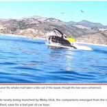 ホエールウォッチングで女性2人がカヤックごとクジラの口の中に 衝撃に言葉を失う人々(米)<動画あり>