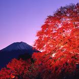 河口湖から臨む富士山と紅葉!「第22回 富士河口湖紅葉まつり」開催