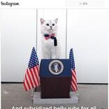 ネコ合衆国大統領の演説 「可愛すぎる大統領」「政治献金がわりにツナ缶どうですか?」