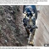 珍しい虎の撮影に成功したアマチュア写真家「一生に一度あるか無いかの奇跡」(印)