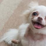 【犬が教えてくれること。】家族の絆ってなんだろう?   /ドッグライフカウンセラー・三浦健太